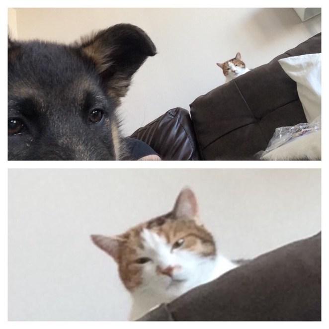 kedi ve köpek kavgası