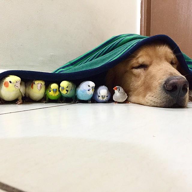 kuşlar ve köpek