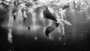Balinaların Fısıltısı
