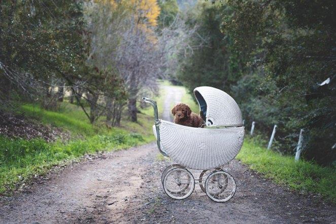 Bebekköpek