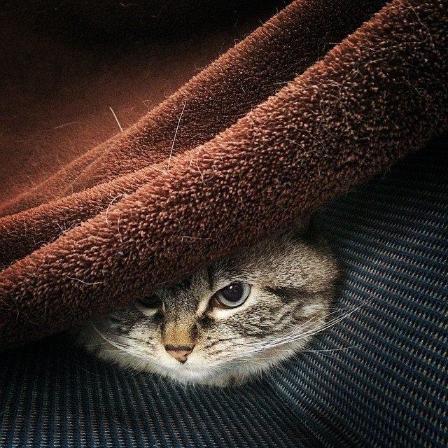 Kedi şirin