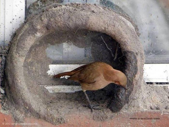 Kuşların yuva yapımı 11