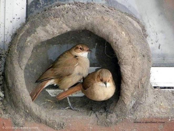 Kuşların yuva yapımı 12