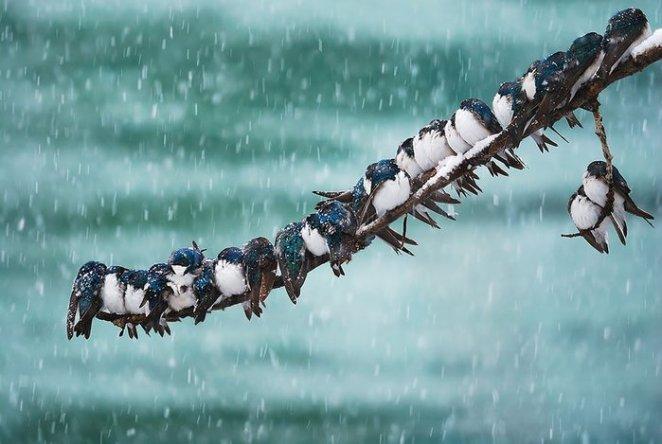 beraber durmuş kuşlar