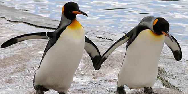eşcinsel penguenler