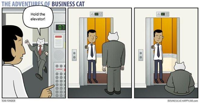 kedi patron oldu