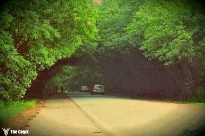 ağaç ve yollar