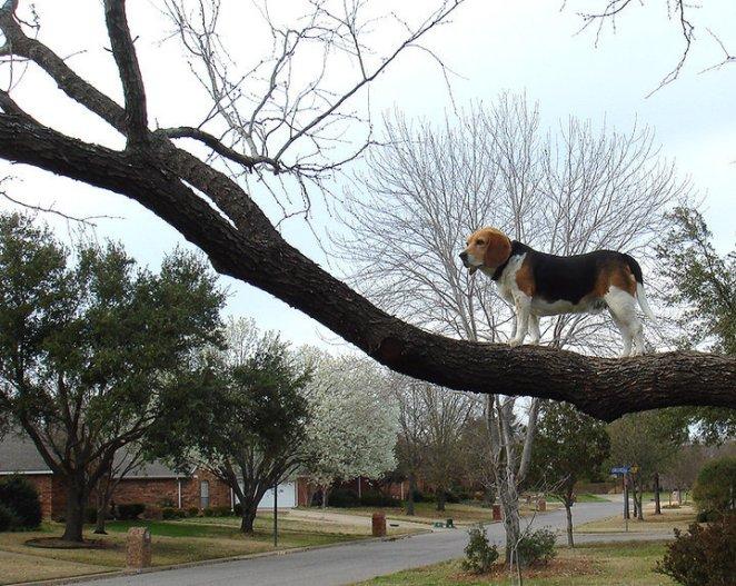 köpek ağaca tırmanmış