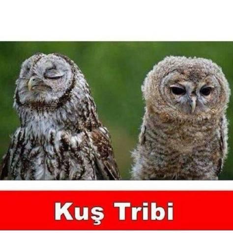 kuş tribi