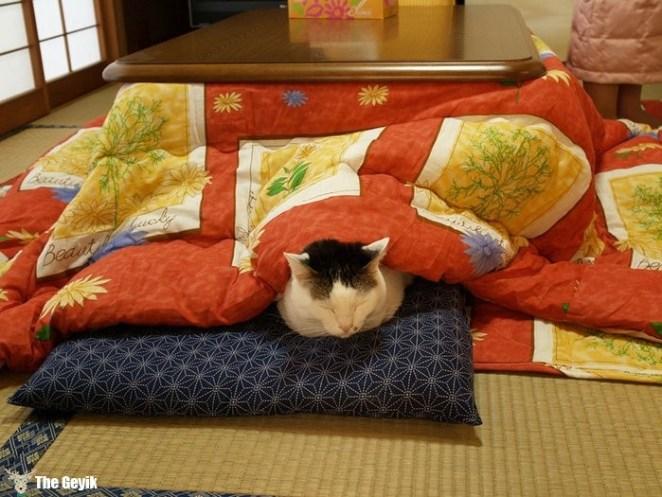 yatak kedi