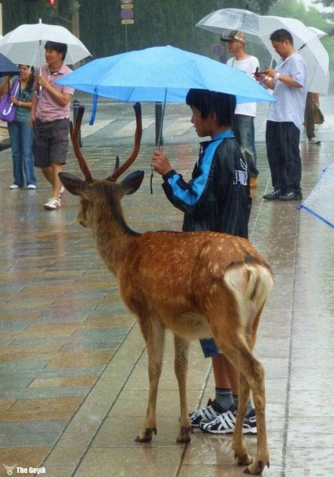 şemsiyeli geyik