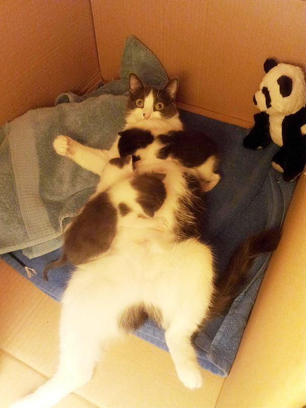 anne kediler 2