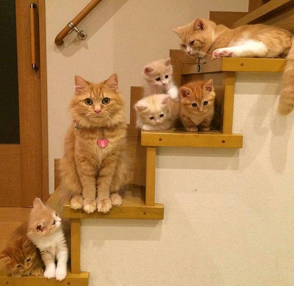 anne kedileri