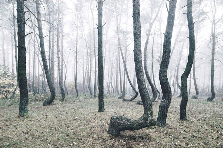 eğik orman