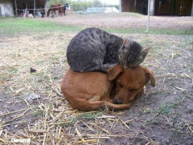 köpekle dost kedi