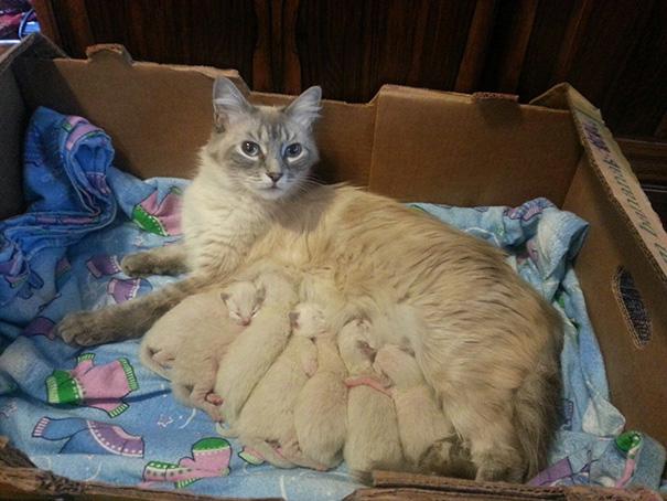 kedi aileleri