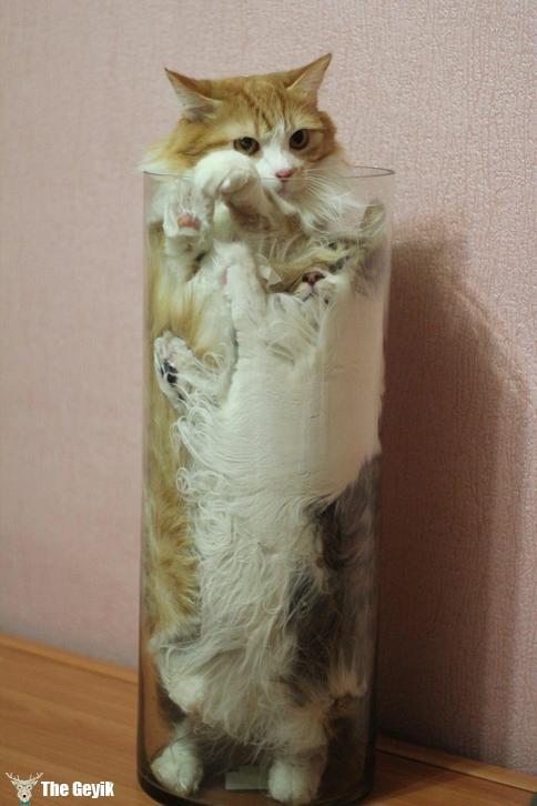 kedi komik fotolar