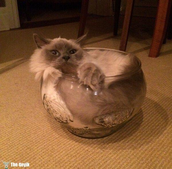 kedi komik