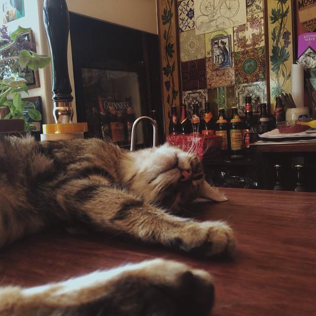 kedi sarhoş