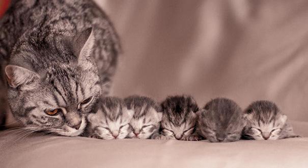 kediler aile 3