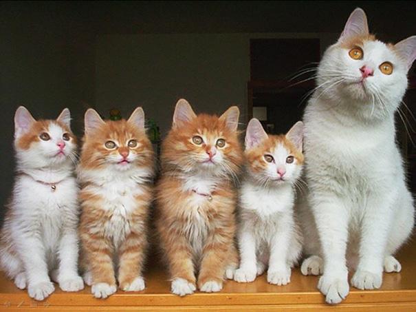 kediler aile 6