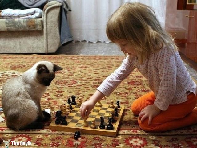 satranç oynayan kedi