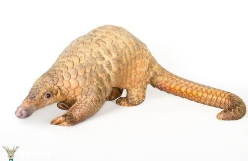 türü tehlikede olan hayvanlar 11