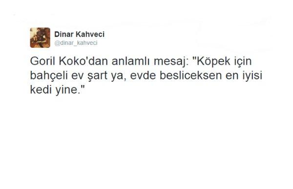 koko dinar
