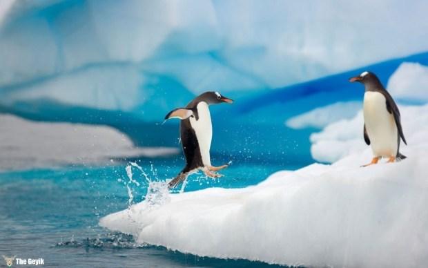 penguen fotoğrafları 5