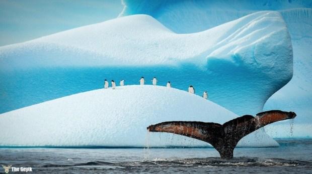 penguen fotoğrafları komik 8