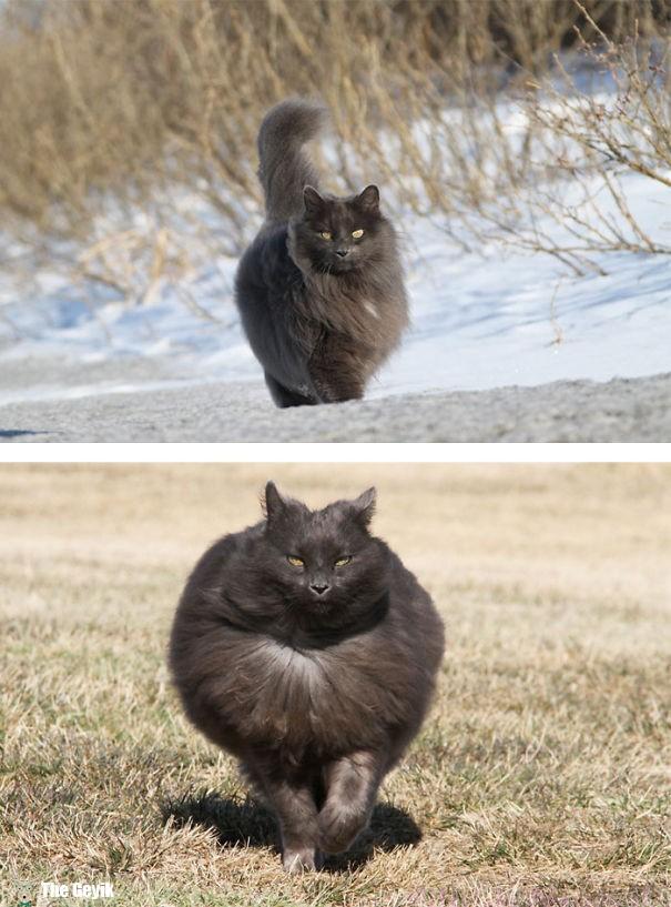 tüylü kediler