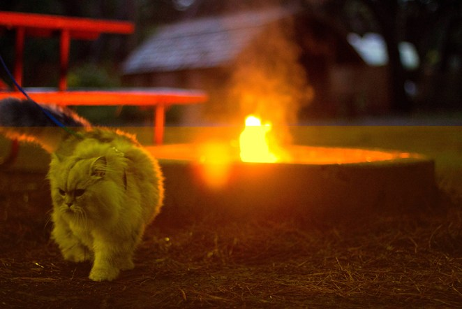 gandalf-cat-travelling-the-world-1