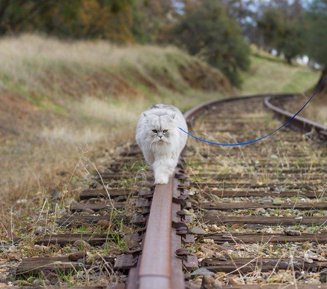 gandalf-cat-travelling-the-world-6