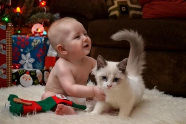 kedi çocuk