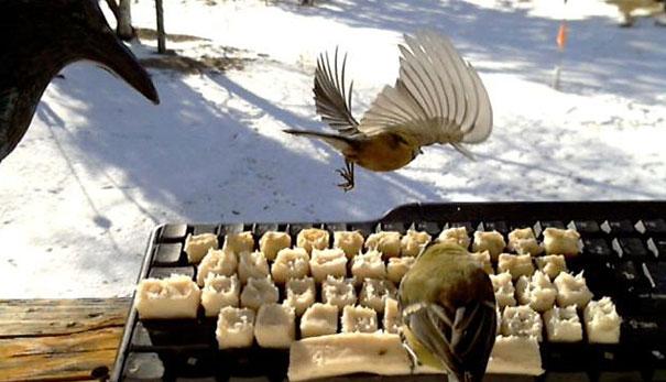 real-birds-on-twitter