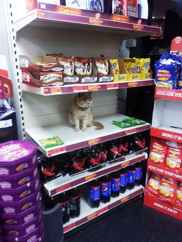 süpermarket kedi