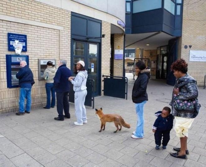 fox-cash-machine-ATM-money