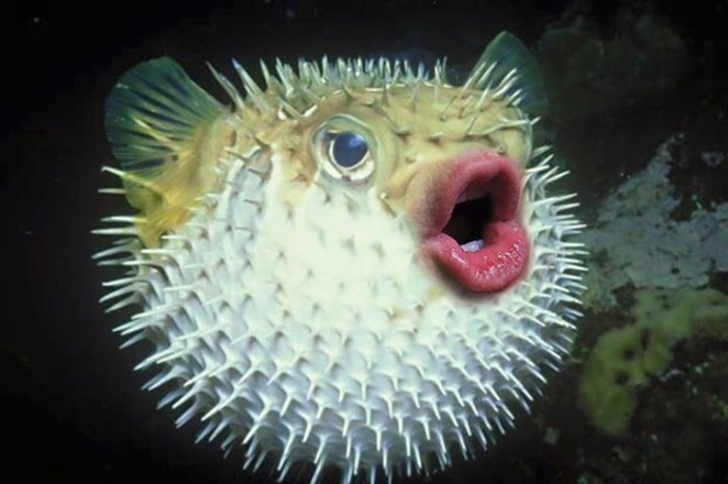 trump-puffer-fish-mouth-photoshop-30__700