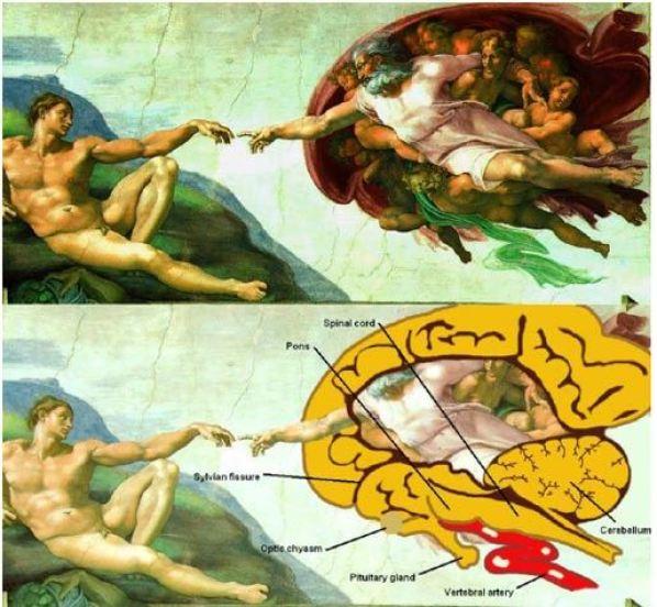 ademin yaratılışı beyin