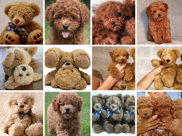 dog-food-comparison-bagel-muffin-lookalike-teenybiscuit-karen-zack-52__700