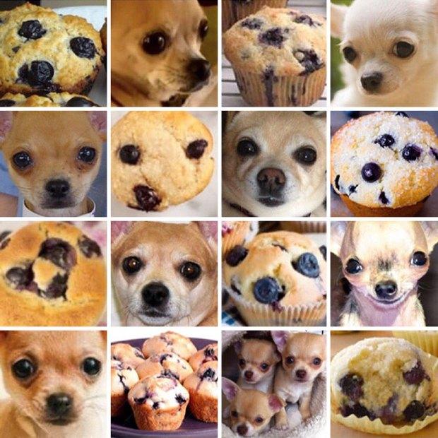 dog-food-comparison-bagel-muffin-lookalike-teenybiscuit-karen-zack-7__700