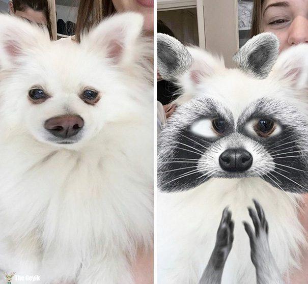 Evcil Hayvanları Snapchat Filtreleriyle Buluşturmak 11