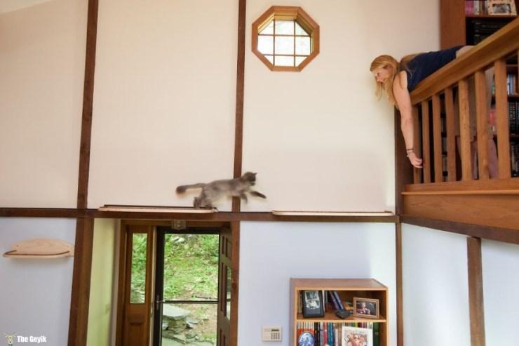 Evini Kediler İçin Tekrar Tasarlayan Hayvansever 10