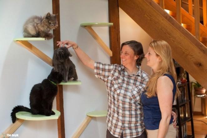 Evini Kediler İçin Tekrar Tasarlayan Hayvansever 3