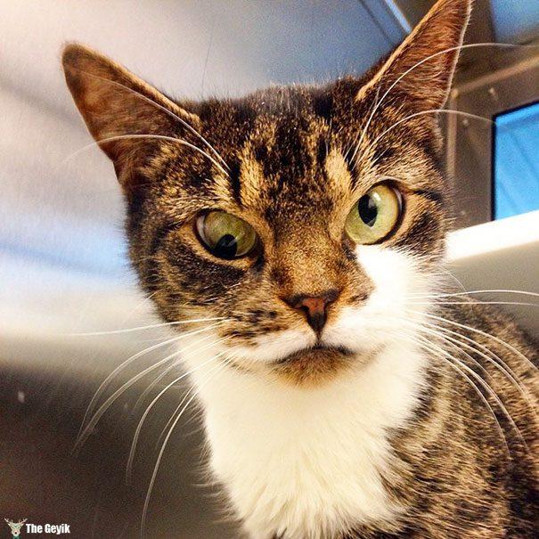 Gözleri Şaşı Olan Kediler8