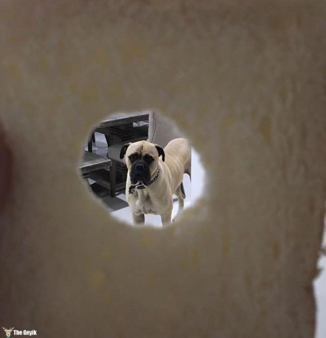 Sahibini Çaktırmadan Stalklamaya Çalışan Köpek 12