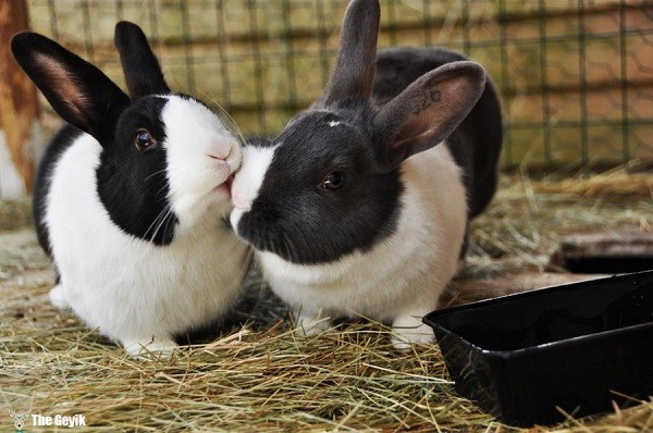 aşkını öperek gösteren hayvanlar 8