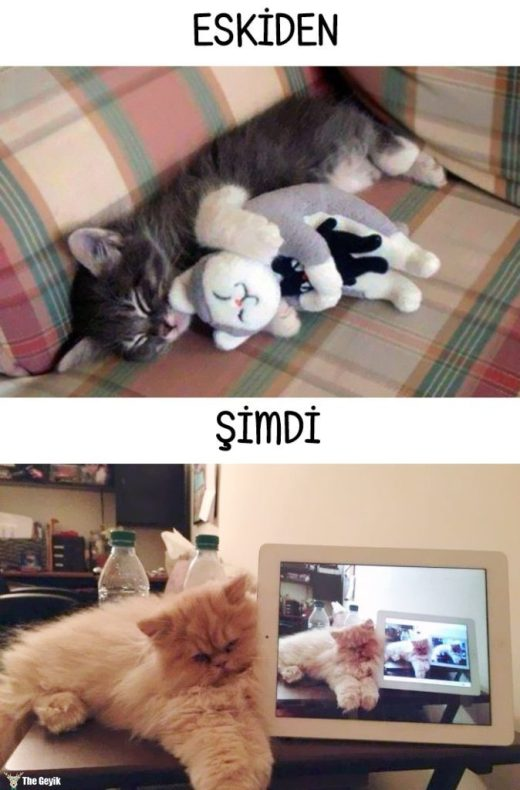 cats-then-now-funny-technology-change-life-10-57162507ede7f__700