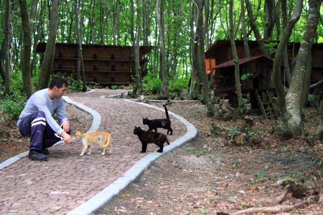 """Samsun'da sokak kedileri için oluşturulan """"Kedi Kasabası""""nda, sokaktan toplanan kedilerin kısırlaştırılarak rahat bir ortamda yaşamını sürdürmesi sağlanıyor. Kasabada yaşayan kedilerle veteriner hekimler tek tek ilgileniyor. (İlyas GÜN - Anadolu Ajansı)"""