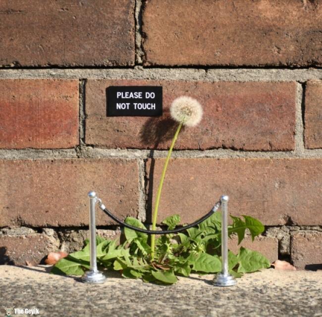 sokak sanatları sokağı canlandırma 15